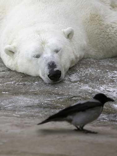 Los animales en 25 años se extinguen cien mil veces más de lo normal
