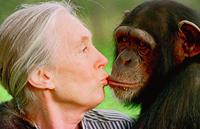 Aumenta la distancia entre humanos y chimpancés