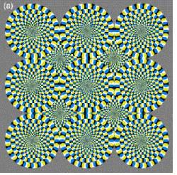 El Cerebro Percibe las Ilusiones Opticas de Movimiento Como Movimientos Reales