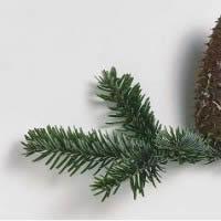 ¿Qué hace una planta en un pulmón?