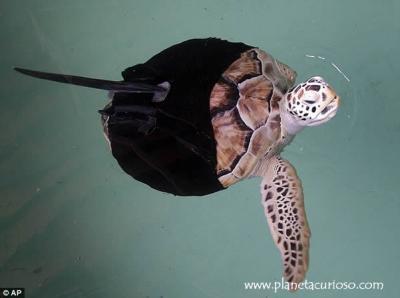 Prótesis para tortuga