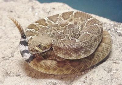 ¿Sabías que el veneno de algunas serpientes puede ayudar al corazón?