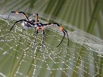 Las telas de araña más grandes del mundo