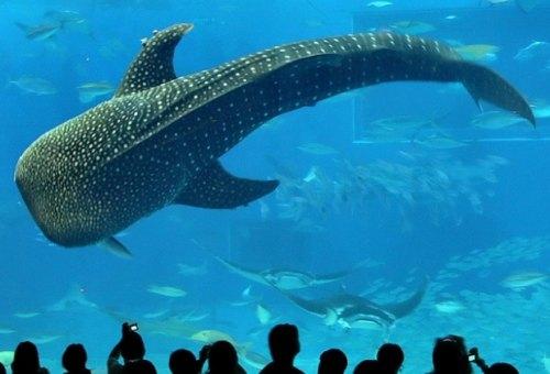 Hallado tiburón de 12 metros.